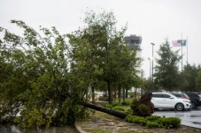 An uprooted tree partially blocks Terminal Dr. at the Florence Regional Airport as Hurricane Florence slowly moves across the East Coast Friday, Sept. 14, 2018, in Florence, S.C. (AP Photo/Sean Rayford)